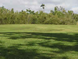 View of the lofty bamboos